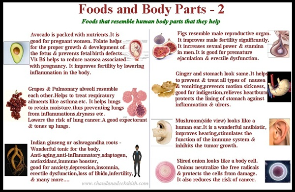 foods and body parts 2